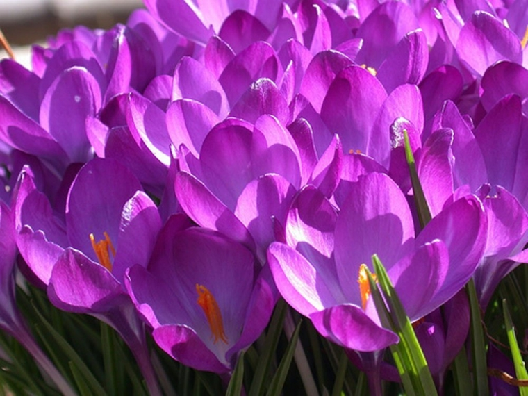 Beautiful Pinkish Purple Flowers