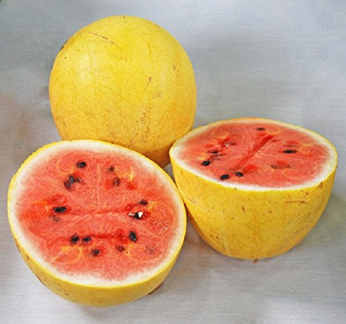 Yellow Israeli Golden Midget Watermelon Citrullus Lanatus