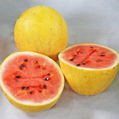 Yellow Israeli Golden Midget Watermelon Citrullus Lanatus
