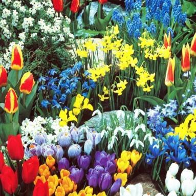 A Complete Spring Garden