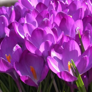 Beautiful Pinkish Purple Flowers