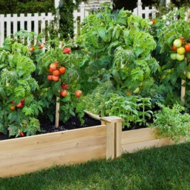 Greenes Fence 48-Inch x 96-Inch Cedar Raised Garden Bed