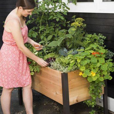 Raised Garden Bed Elevated Cedar Planter Box